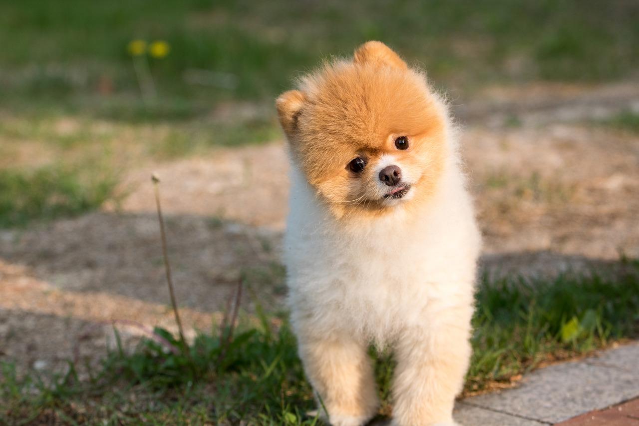 中国語 単語 犬